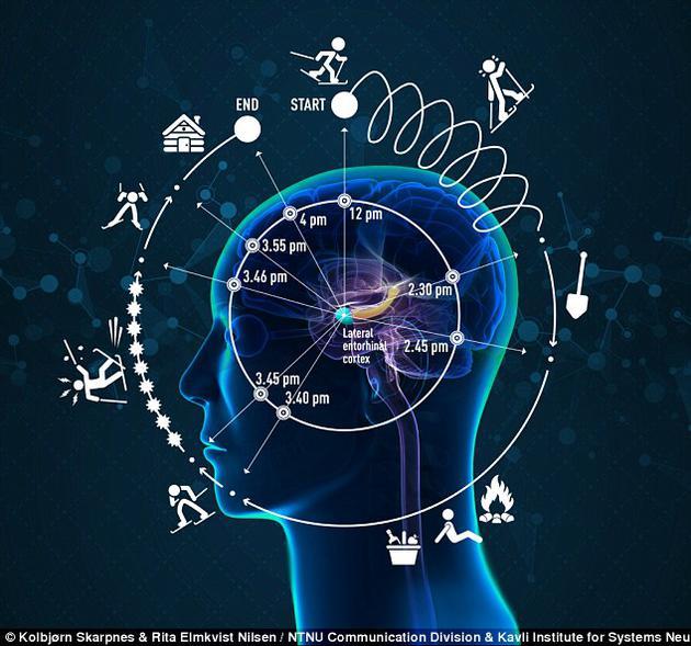 图中展现了4小时滑雪之旅履历的人脑影象,从一个峻峭山峰,履历长达4小时的滑雪之旅,图中包罗了滑雪者对工夫的感知变革。该看法是有履历的工夫依赖于变乱历程,而且大概被以为比时钟工夫更快或更慢。最新发明有履历的神经记录位于大脑内嗅皮层外侧(LEC)。在LEC阁下是大脑内嗅皮层内侧(MEC),大脑的空间地位(图没有刻画)。在大脑内嗅皮层内侧阁下是海马体,这个布局中来自工夫和空间网络的信息聚集在一同构成了景象影象