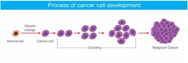 癌细胞的发展过程
