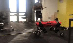 图 ANYmal轮足机器人展现最佳同化步态