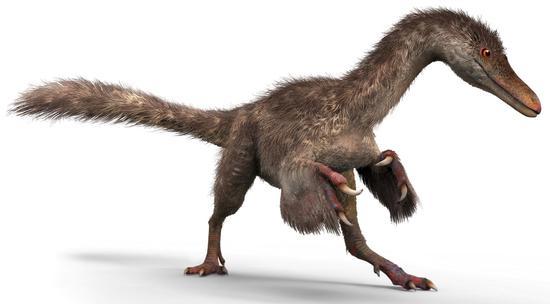 根据琥珀复原的手盗龙类恐龙-绘图-张宗达与刘毅