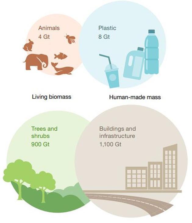 当前的植物、动物、塑料以及建筑物的重量估计