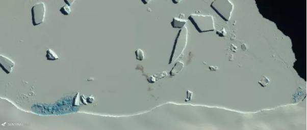 欧空局哨兵2号卫星在2016年拍摄的盖茨角卫星图像显示了帝企鹅的粪便污迹(褐色斑点)。