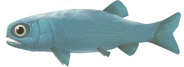 图5。 亚洲肋鳞裂齿鱼复原图 (许勇 供图)