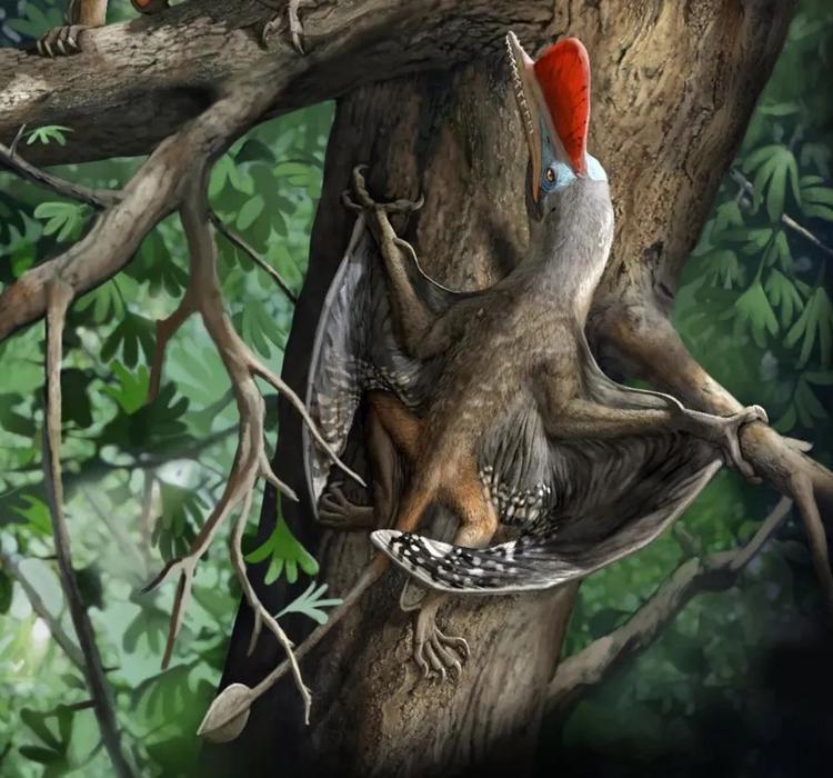 """侏罗纪的这种翼龙竟然会""""擒拿手""""!"""