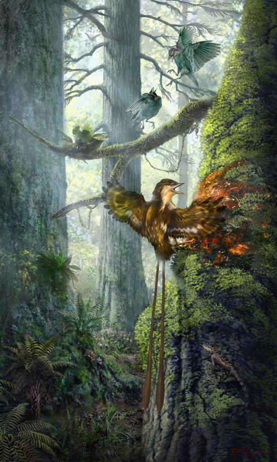反鸟被树胶粘住-张宗达绘图