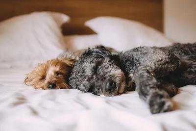 你睡觉的床如何成了细菌、尘螨的温床
