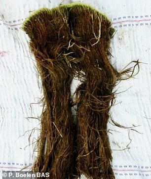 英国南极勘测队科学家也获得了类似的发现,他们从南极收集到1500年前的苔藓样本。