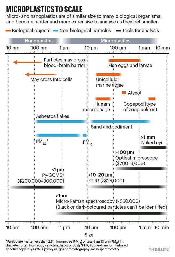纳米塑料非常小,很容易被海洋生物吞食,这些海洋生物会将它们误认为食物