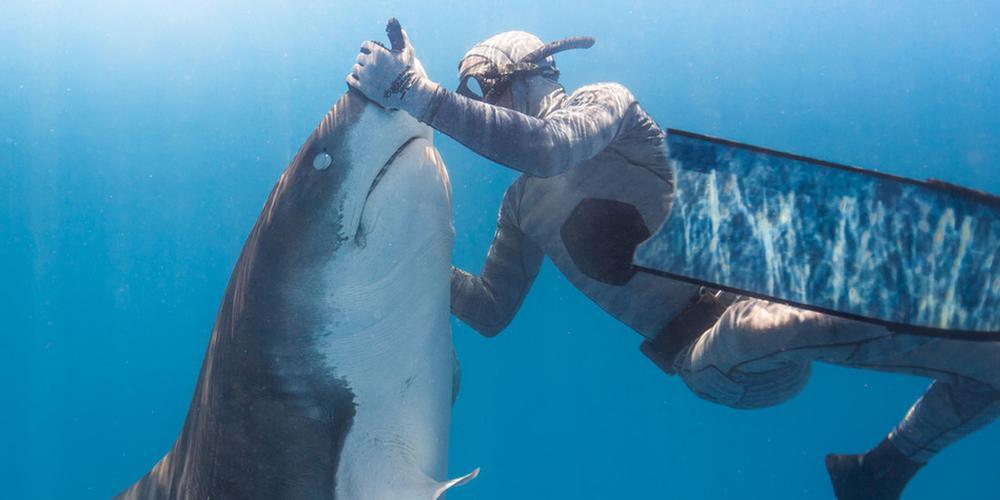 """鲨语者来了!潜水员催眠凶狠虎鲨盘成了""""北鼻"""""""