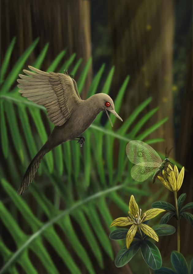 中美加科学家团队在琥珀里发现世界最小恐龙
