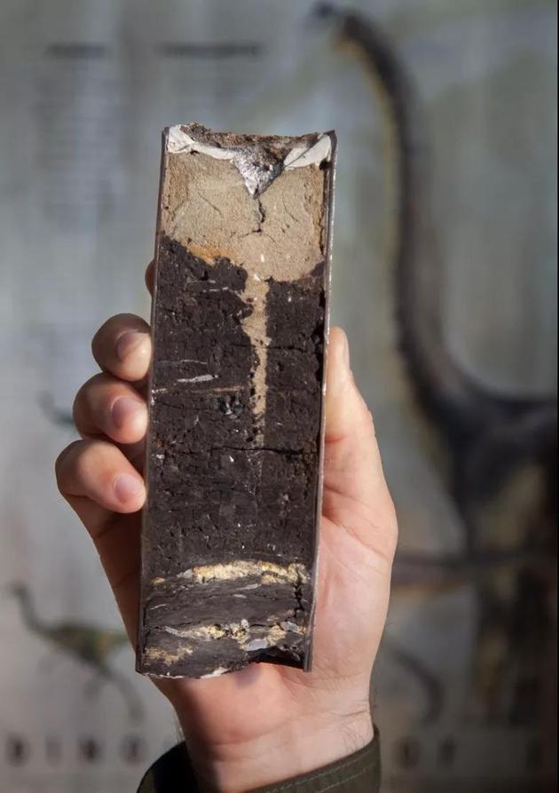 德帕玛在遗址中采集的岩心样品,该遗址可能保留着白垩纪末期小行星撞击的地质记录