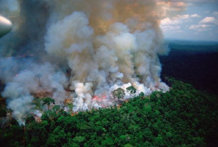 """""""地球的肺""""亚马逊雨林持续三周大火似地狱"""