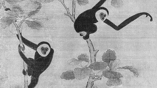 """这种长臂猿被命名为富有象征意义的""""君子属帝国种长臂猿"""",这参考了长臂猿在中国传统上的崇高地位"""