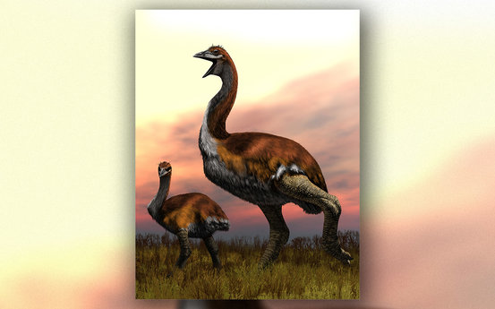 科学家在马达添斯添发现了一个新的象鸟物栽,其高度可达3米,重达800公斤。