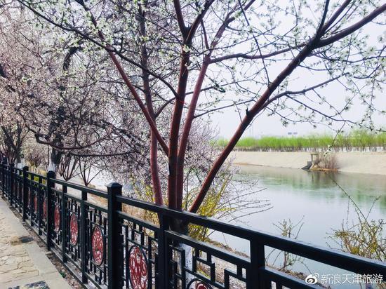 天津市桃花堤在哪_盛装归来的桃花堤 撑起了整个春天的颜值_新浪天津_新浪网