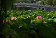 夏日西沽公园野趣横生