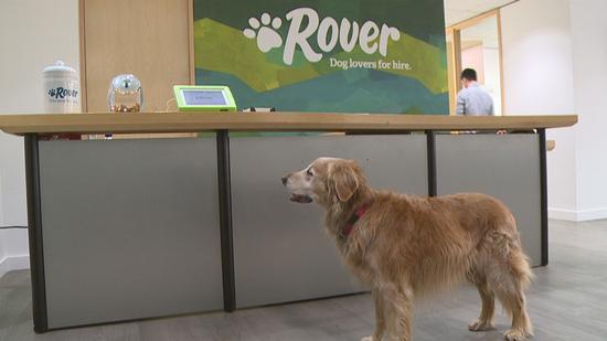 宠物寄养网站Rover融资2500万美元