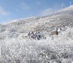 飞渡峡四月飞雪如童话世界