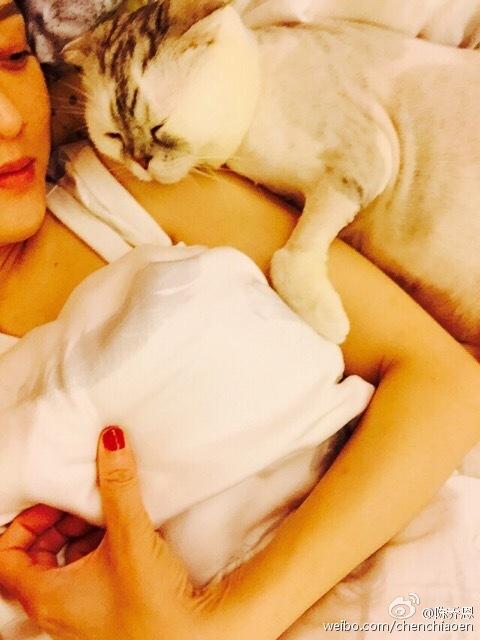 陈乔恩与猫的早晨