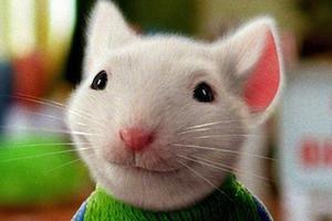 精灵鼠小弟读书小报_《精灵鼠小弟》将拍第4部 童年回忆回归 精灵鼠小弟 索尼 Stuat ...
