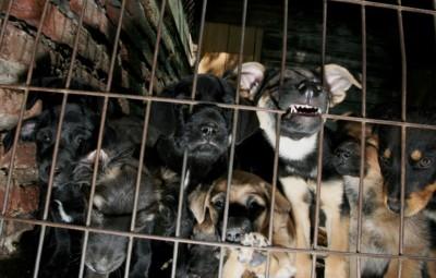 虐待小�_社会万象    城市晚报讯  之前网上流出虐待小动物的视频,引起舆论