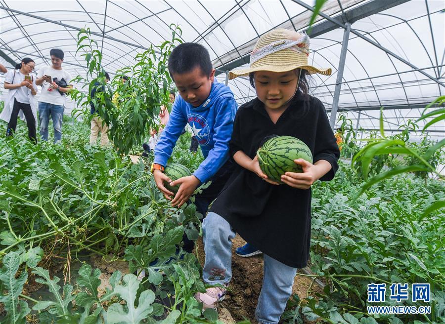 播掘金vs北京市属公20年春节年啦19个年第一天