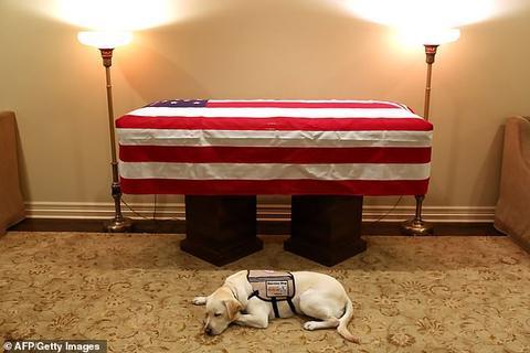 萨利被拍到躺在布什的灵柩旁。(法新社)