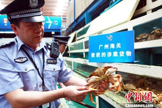 广州海关缉私警察现场插口私运至宝蟹- 丘永忠 摄