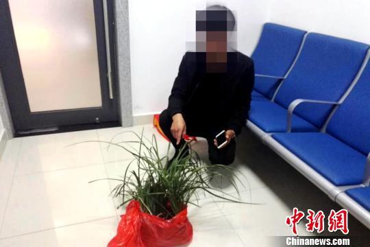 11月20日,河南籍旅客陈某瑞在旬阳北站派出所乘车时携带7株野生兰草被民警查获。 安康铁警 摄