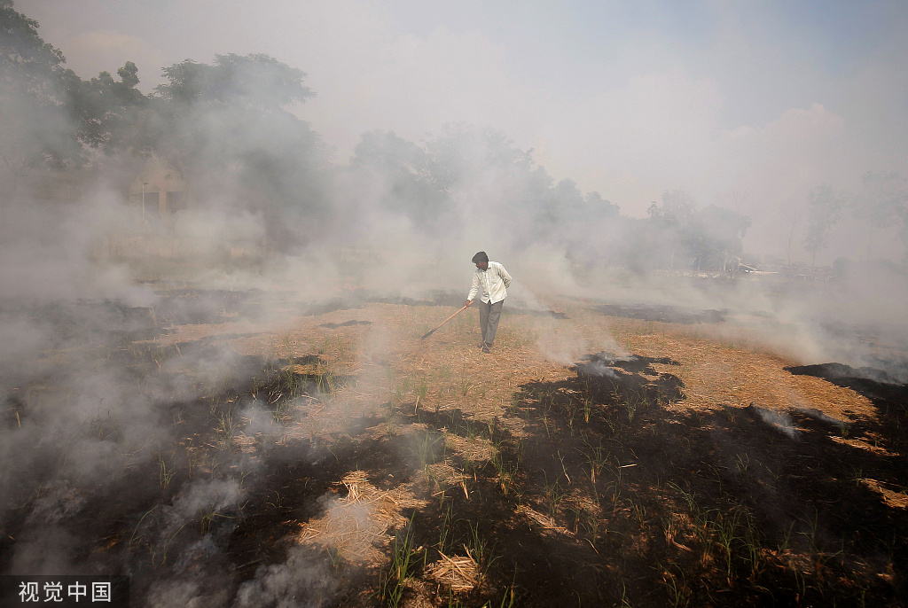 当地时间11月6日,印度农民大量焚烧作物秸秆 农田上空烟雾缭绕 @视觉中国