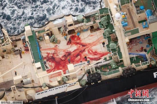 原料图:逆捕鲸整体公开的日本捕鲸船只。