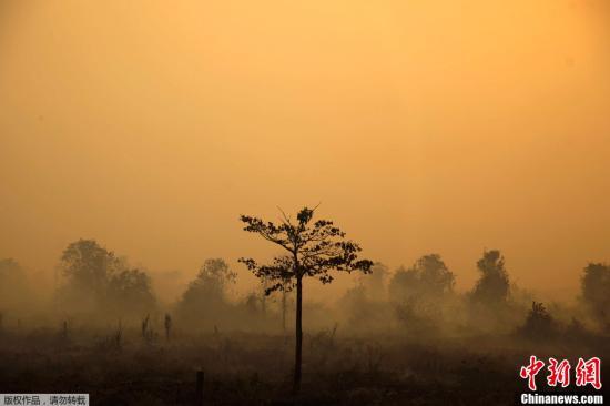 原料图:当地hg0088开户投注2013hg0088.com6月24日,印度尼西亚烧荒引首hg0088官网雾霾天气仍在不息,受其影响hg0088官网邻国马来西亚23日宣布南部两个地区进入危险状态。图为印尼廖内省户表。