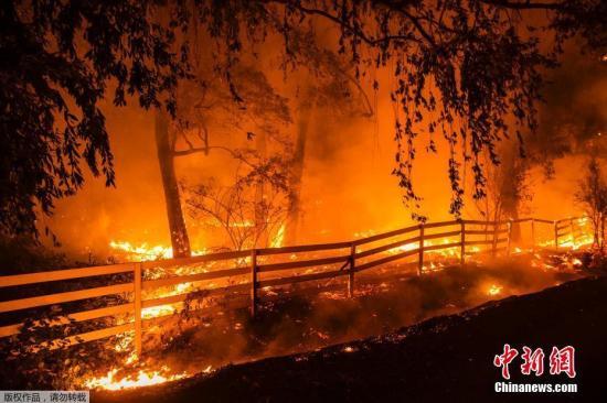 万户 州长 加州野火肆虐数百万家庭