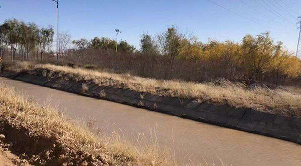 造纸厂产生的污水在混合黄河水后沿干渠流淌,最终流进林区进行灌溉。澎湃新闻记者 陈雷柱 图