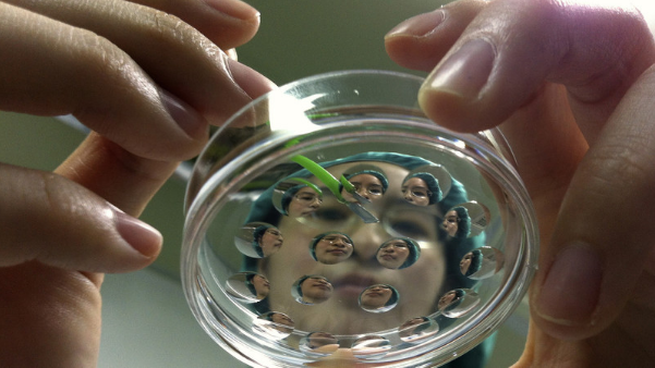 日本要在豬體內培植人類臟器:二者內臟大小最相近