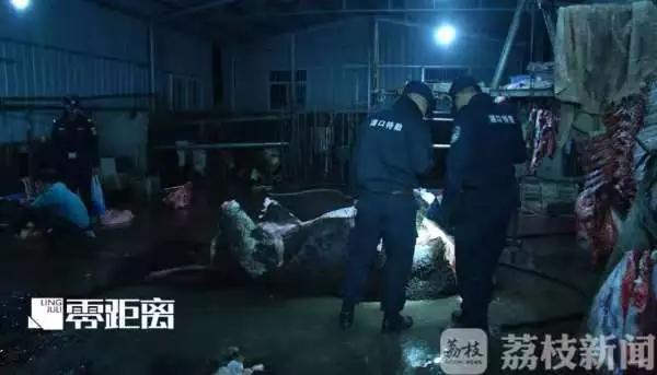 威尼斯人平台黄牛被注水120斤流泪_监管部门:两屠宰点已被取缔