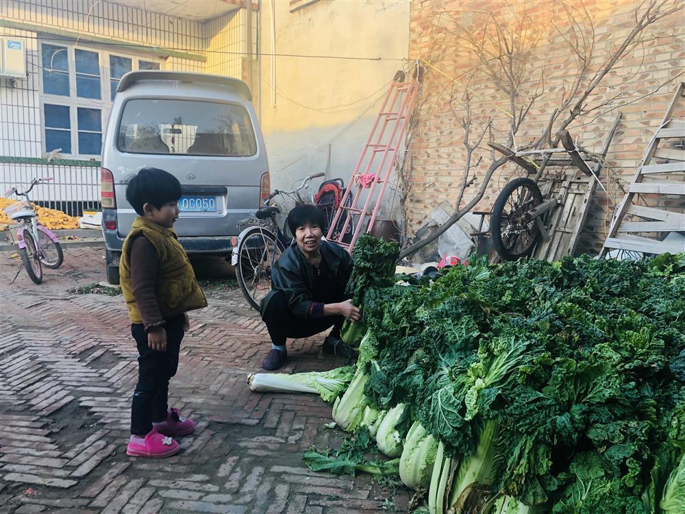 11月11日下午,林福敬在自家院子里整理白菜。 杨书源 摄