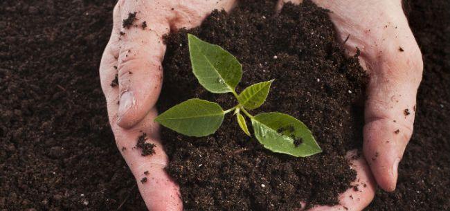 国务院参事刘志仁:雄安生态修复任务艰巨,土壤修复是第一位