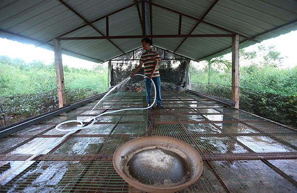 在农庄做事时,黄家光清扫农庄里的鸡舍。 视觉中国 原料图