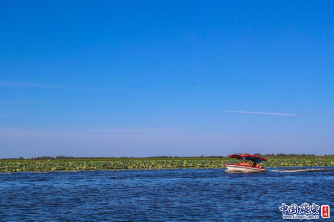 游客们乘船游览白洋淀(9月4日摄)。中国雄安官网记者王京卓摄