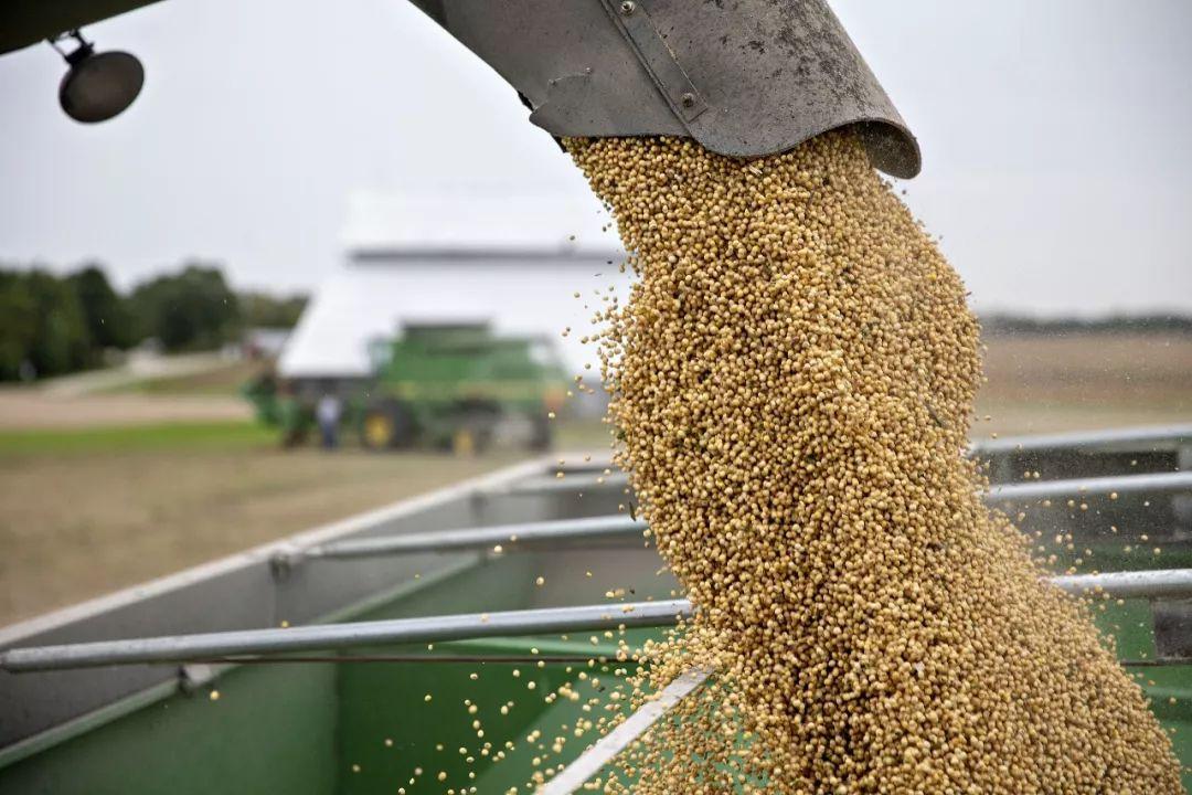 ▲原料图片:9月18日,美国伊利诺伊州,农民收割大豆。(视觉中国)