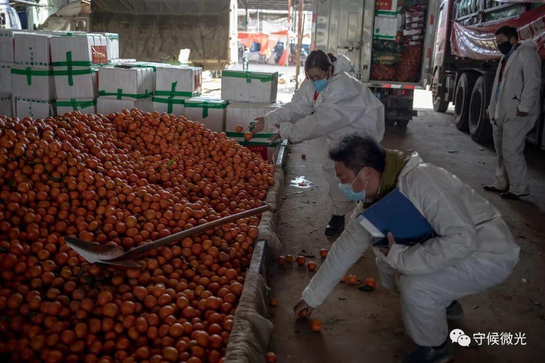 2月17日,湖北省孝感市,蔬菜批发市场内,市商务局的梁丽华和同事们将地上散落的橙子拾回。她特意负责孝感市各定点医院的施舍水果配送做事。中青报·中青网记者 李隽辉/摄