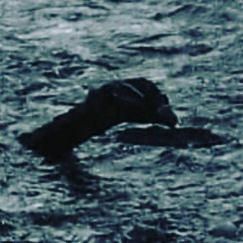 """原料图片:菲利普斯拍到的""""尼斯湖水怪""""。(台湾中时电子报)"""