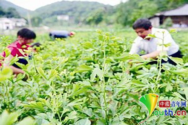 王光国带领村民发展绿色产业脱贫致富。资料图