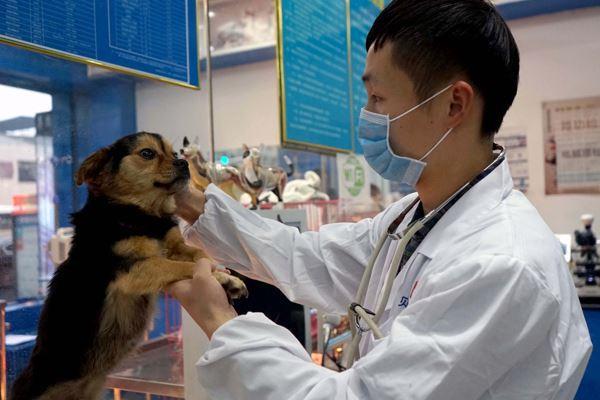 宠物医疗调查:看病比人贵、医生缺口大、专业度待提高