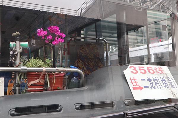 公交车上的花是周姨妈送的。受访者供图