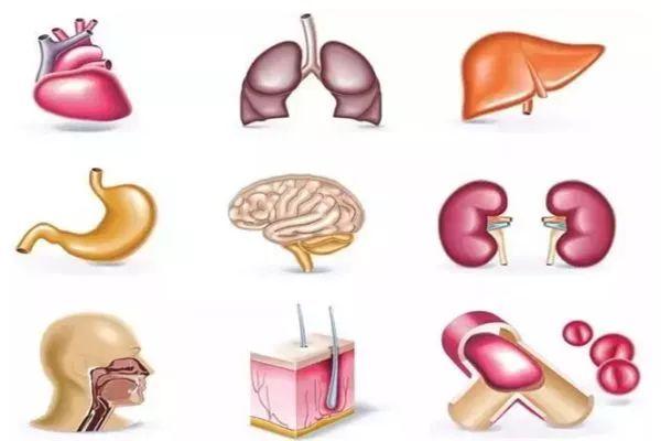 身体器官竟然也有穷养、富养之分 你都养对了吗?
