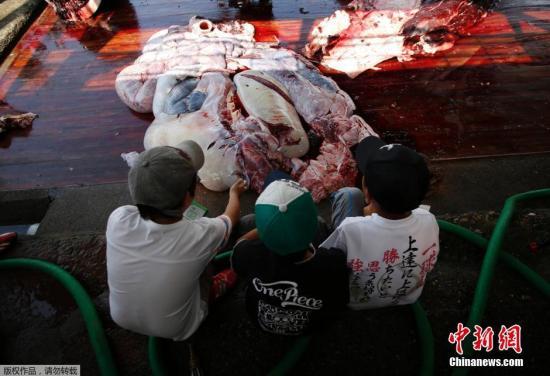 当地时间2014年6月26日,日本千叶,为了祝贺捕鲸季最先,千叶市屠鲸厂构造日本在校弟子围不悦目宰杀鲸鱼的过程,并将割下的鲸肉分发给在场的人。此前说相符国法庭出台禁令,不准日本在南极洲附近捕杀鲸鱼。