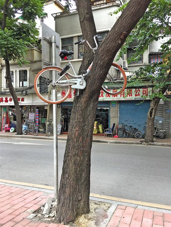 100%返现、免费骑 共享单车烧钱争一哥的照片 - 8