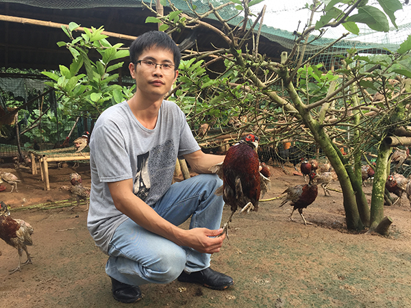 """回家养鸡5年,张柏铭瘦了30斤,如今有3家养鸡场,养着10多万只鸡,是""""罗定山鸡王""""。 本文图均为澎湃新闻记者 陈绪厚 图"""